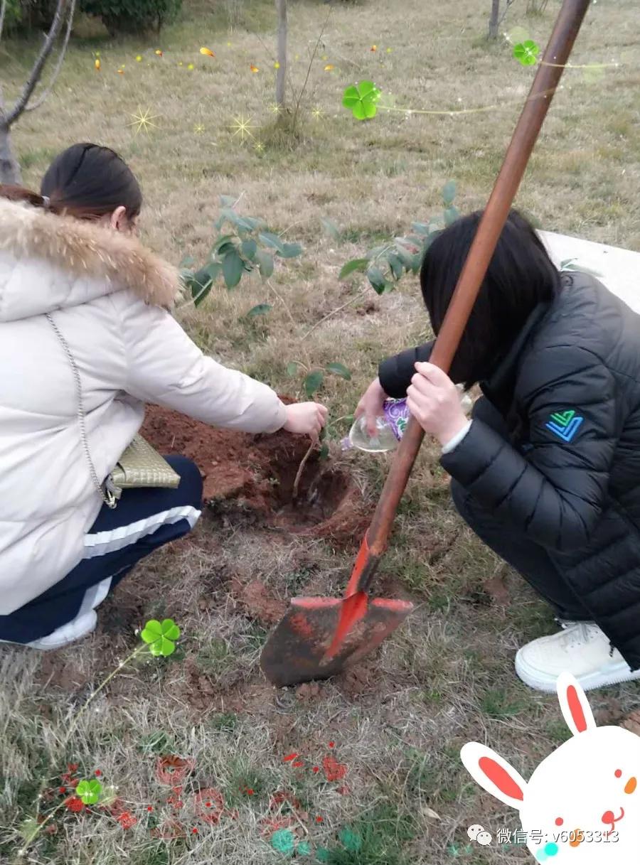 【员工风采】栽下一颗树苗,传承一种精神!