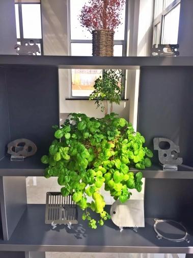 办公区绿植